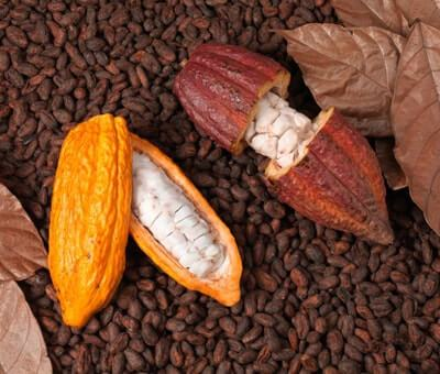 Food Thoughts Cocoa Pods
