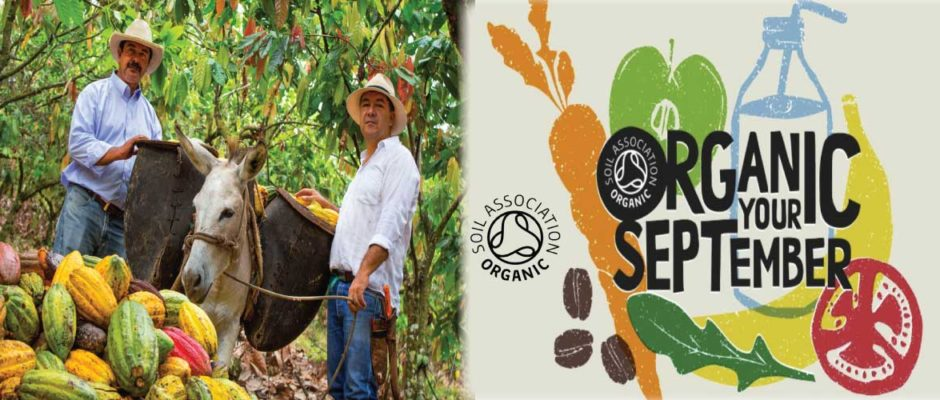 Buy Organic Cacao Powder or Cocoa Powder for Organic September